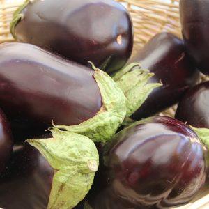 Eggplant Plant Greenhouse to Garden