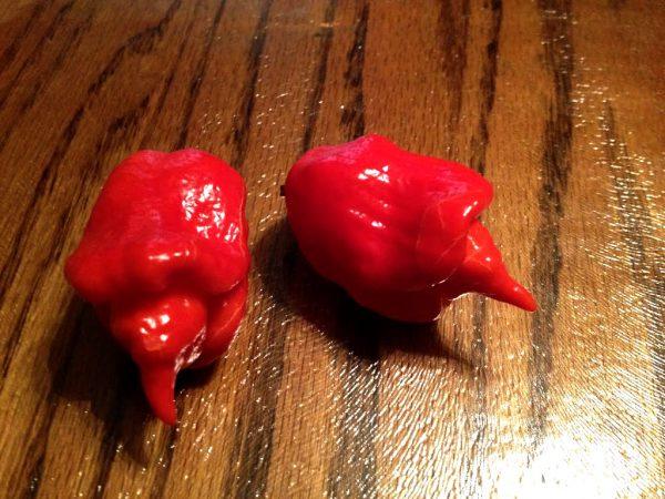 Hot Peppers - Trinidad Scorpian - Greenhouse to Garden