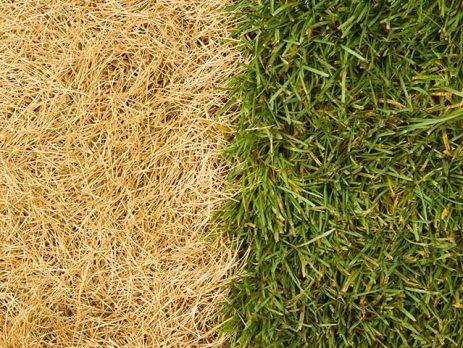 Grow Grass In The Summer