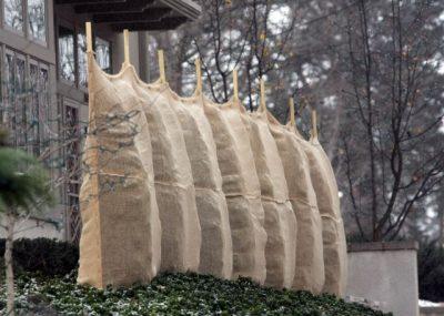 Winter Tree Care - Greenhouse to Garden Vaughan Online Garden Centre